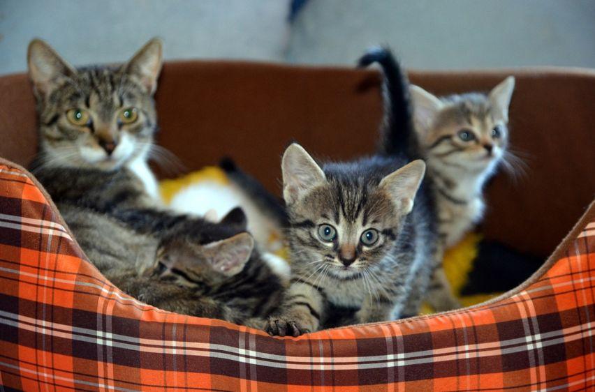 panduan merawat kucing dewasa dan anak kucingnya