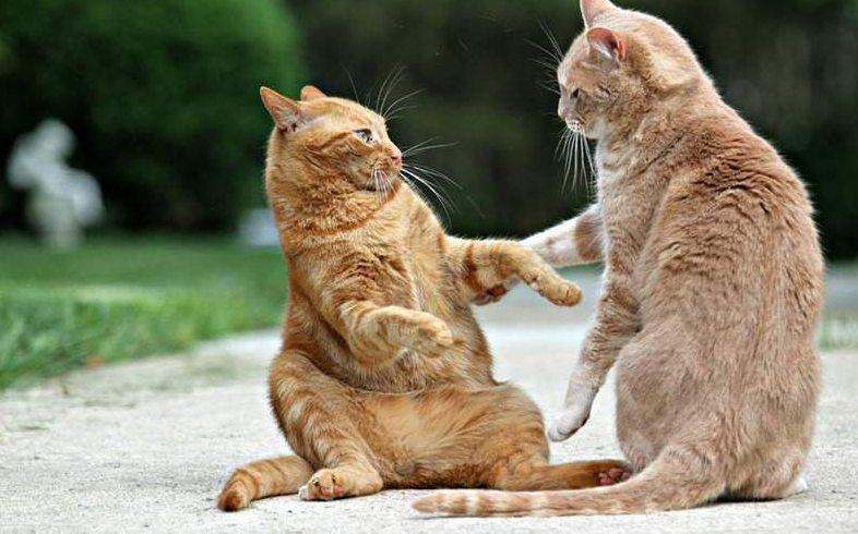 Cara Mengatasi Kucing Kurapan Pisahkan kucing kurapan dengan kucing lainnya