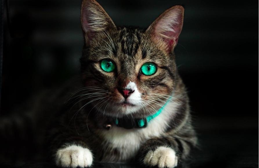 sayangi kucingmu supaya terhindar dari kutu