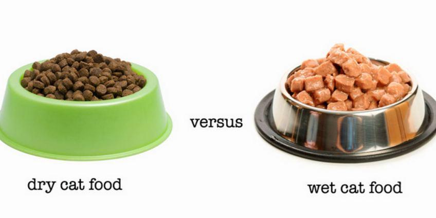 Bagus Mana Makanan Kering atau Basah