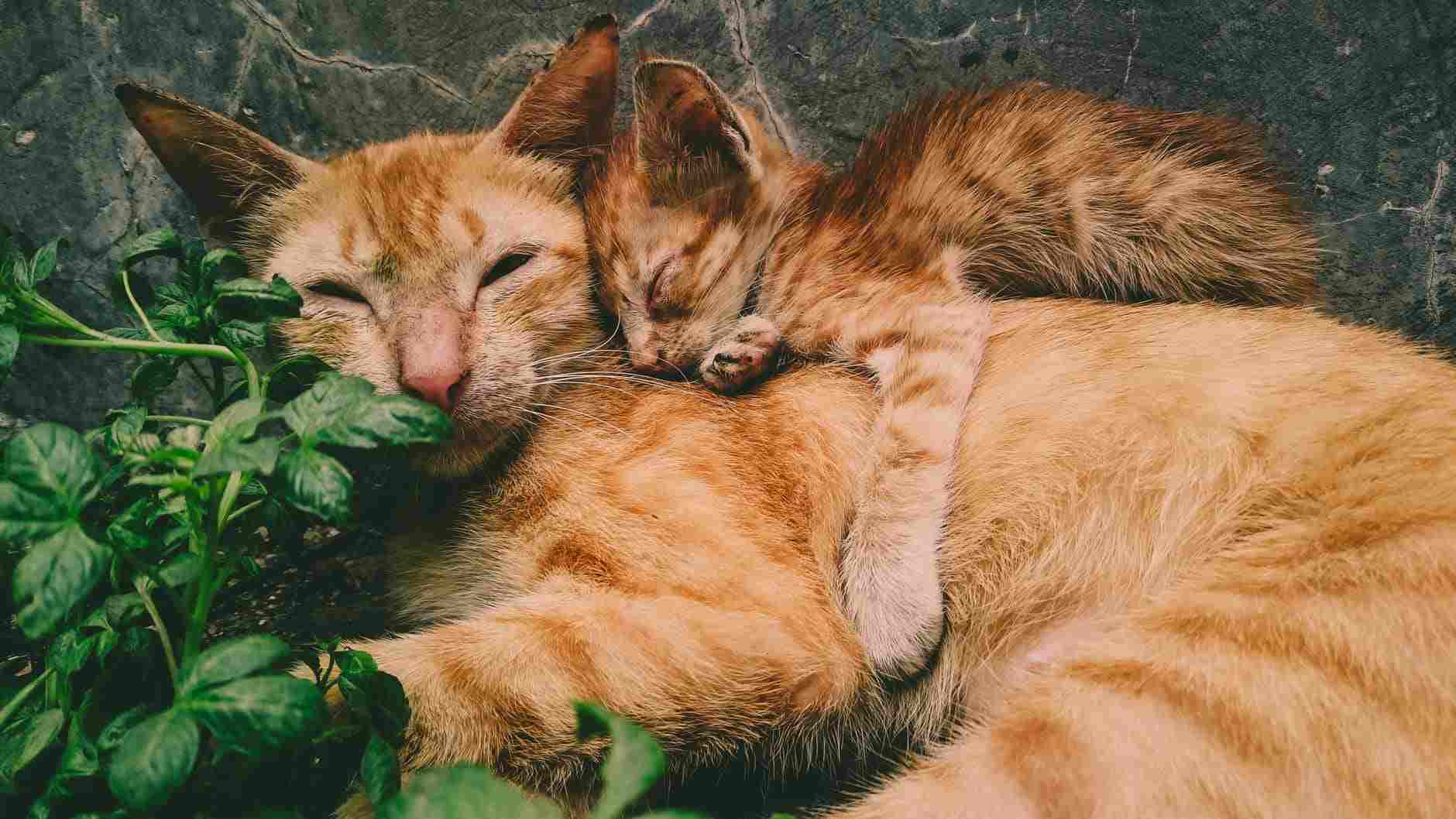 Beri stimulasi agar anak kucing dapat BAB