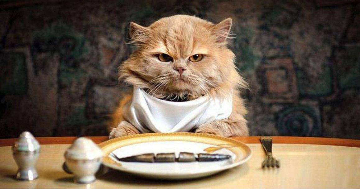 Nafsu makan kucing berkurang
