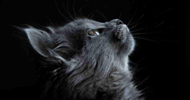 Doa Kucing untuk Tuannya