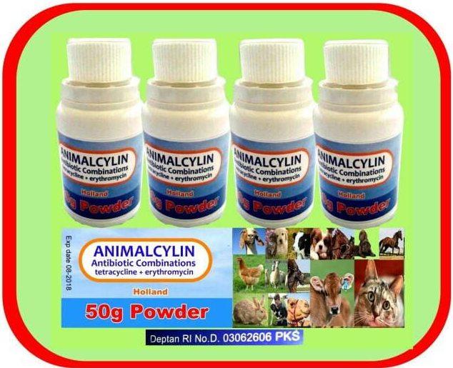 Erythromicyn antibiotik untuk kucing