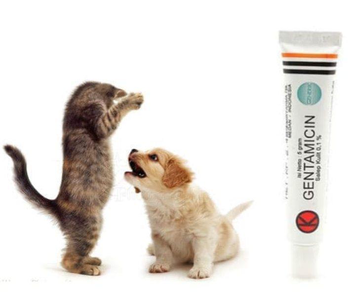Gentamicin antibiotik untuk kucing