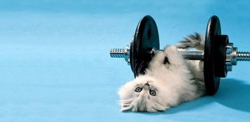 Jaga kesehatan si kucing