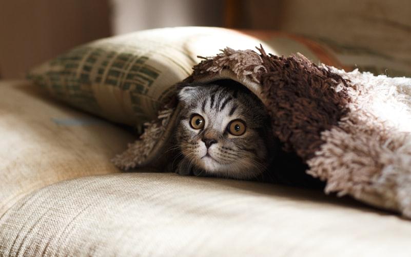 Jika kucing sulit mendengar
