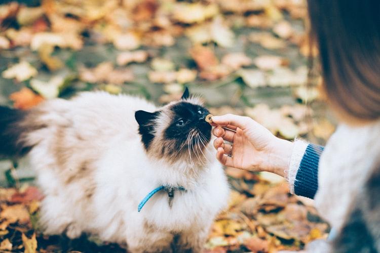 Kucing merupakan makhluk pemakan daging atau karnivora