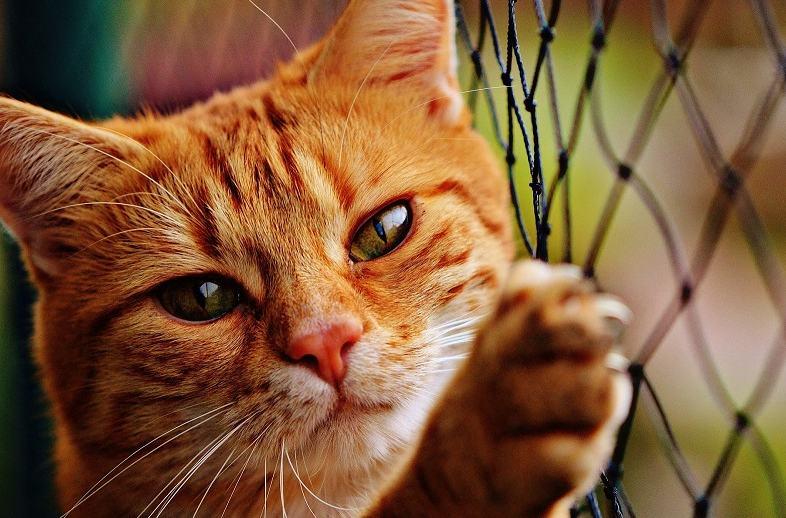 Kucing stres jangan dikurung
