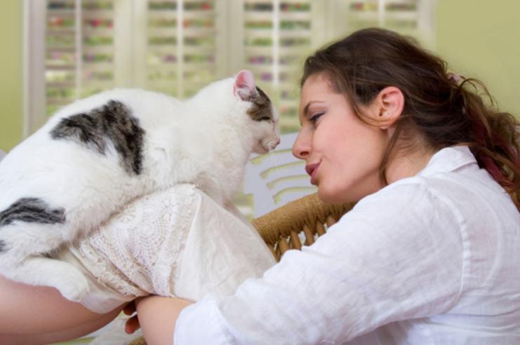 Kucing yang mengeluarkan air mata seringkali menarik simpati orang