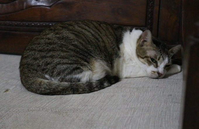 Langkah Merawat Kucing Kampung dengan merawat bulu kucing kampung
