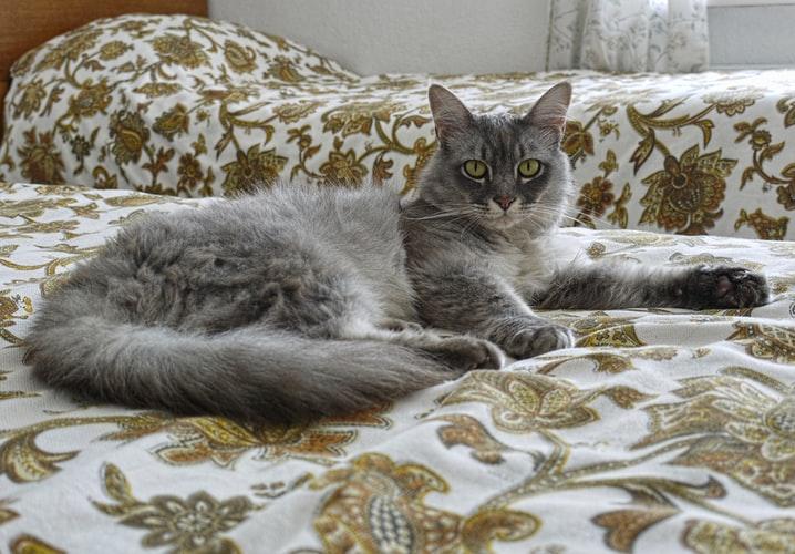 Manfaat VCO untuk kucing Melebatkan dan meningkatkan kelembapan bulu kucing