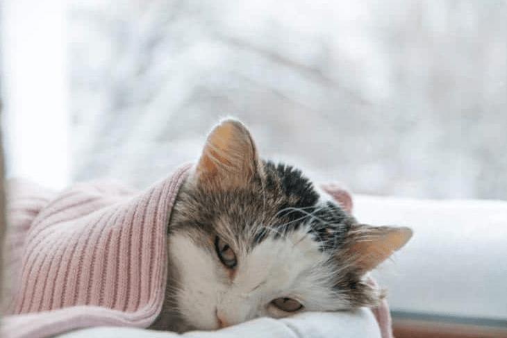 Manfaat VCO untuk kucing Mengobati mencret pada kucing