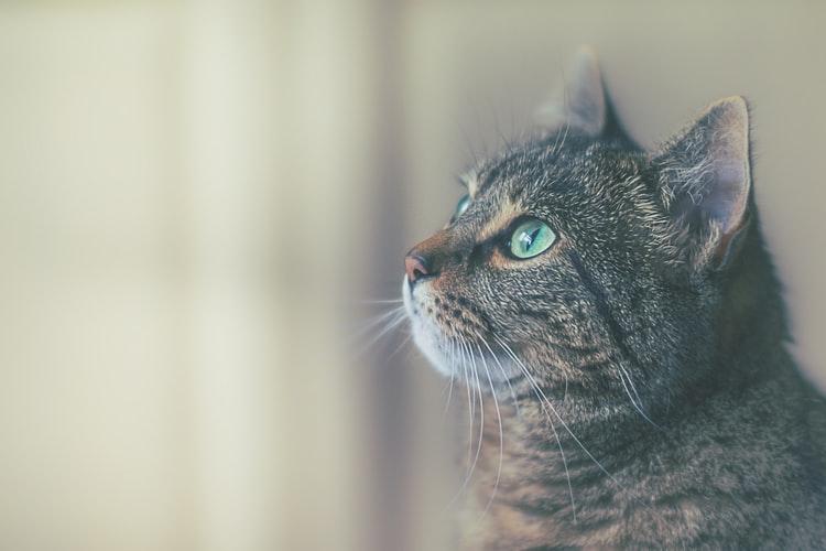 Manfaat memelihara kucing Kucing Menjadi Sumber Pendapatan