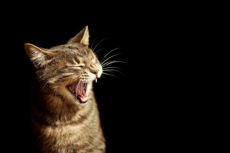 Manfaat memelihara kucing Kucing Pemburu Serangga