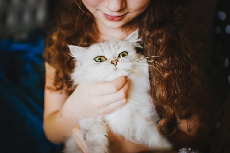Manfaat memelihara kucing Kucing Sebagai Teman Bicara