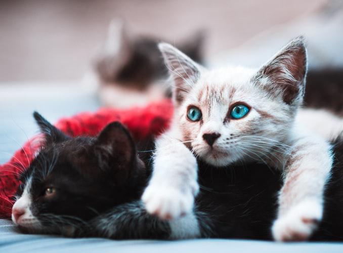 Manfaat memelihara kucing Menumbuhkan Kepedulian