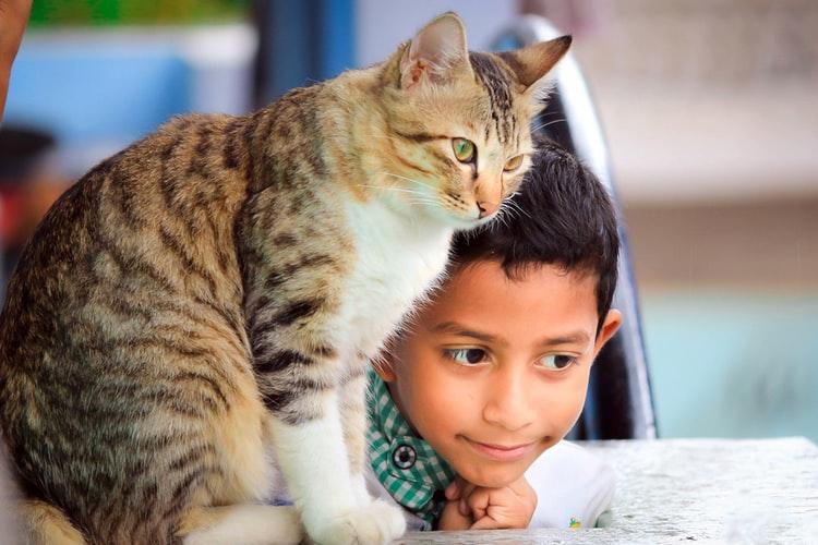 Manfaat memelihara kucing Pemilik Kucing Bisa Merasa Senang