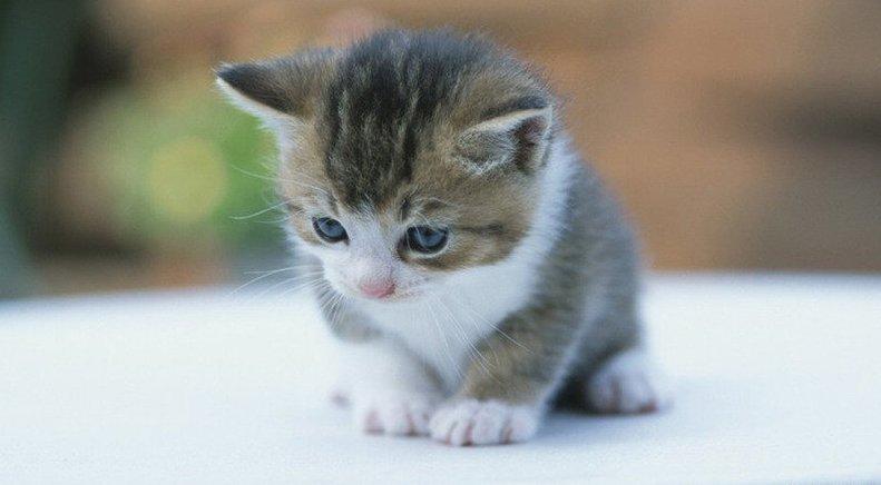 Mayoritas anak kucing sering mengeluarkan air mata