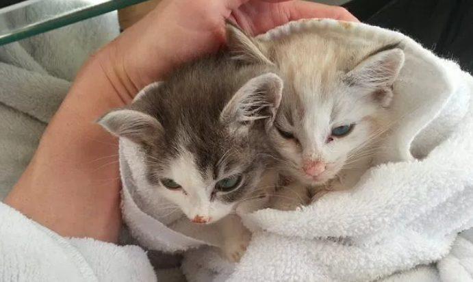 Membalutnya dengan handuk saaat selesai memandikan anak kucing