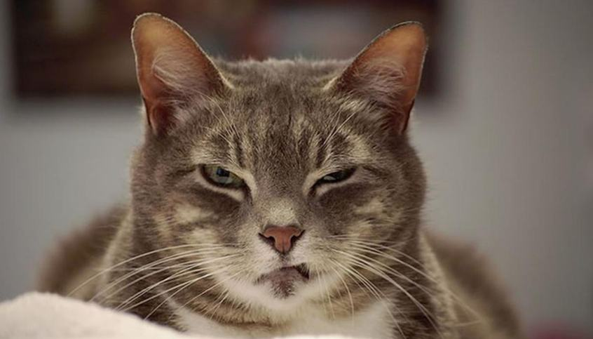Menangis bukanlah cara kucing mengutarakan perasaannya