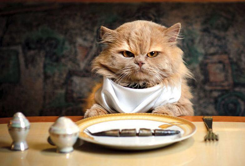 Mengolah Makanan Kucing dari Ikan
