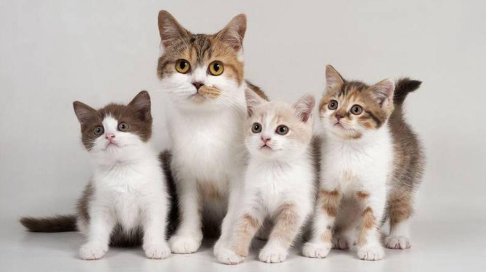 Minimalisir Persaingan Antar Kucing Peliharaan