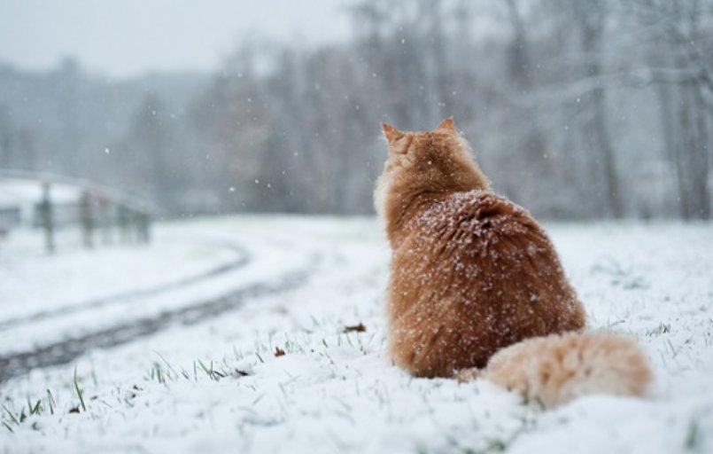 Musim dingin bisa pengaruhi kesehatan mata kucing