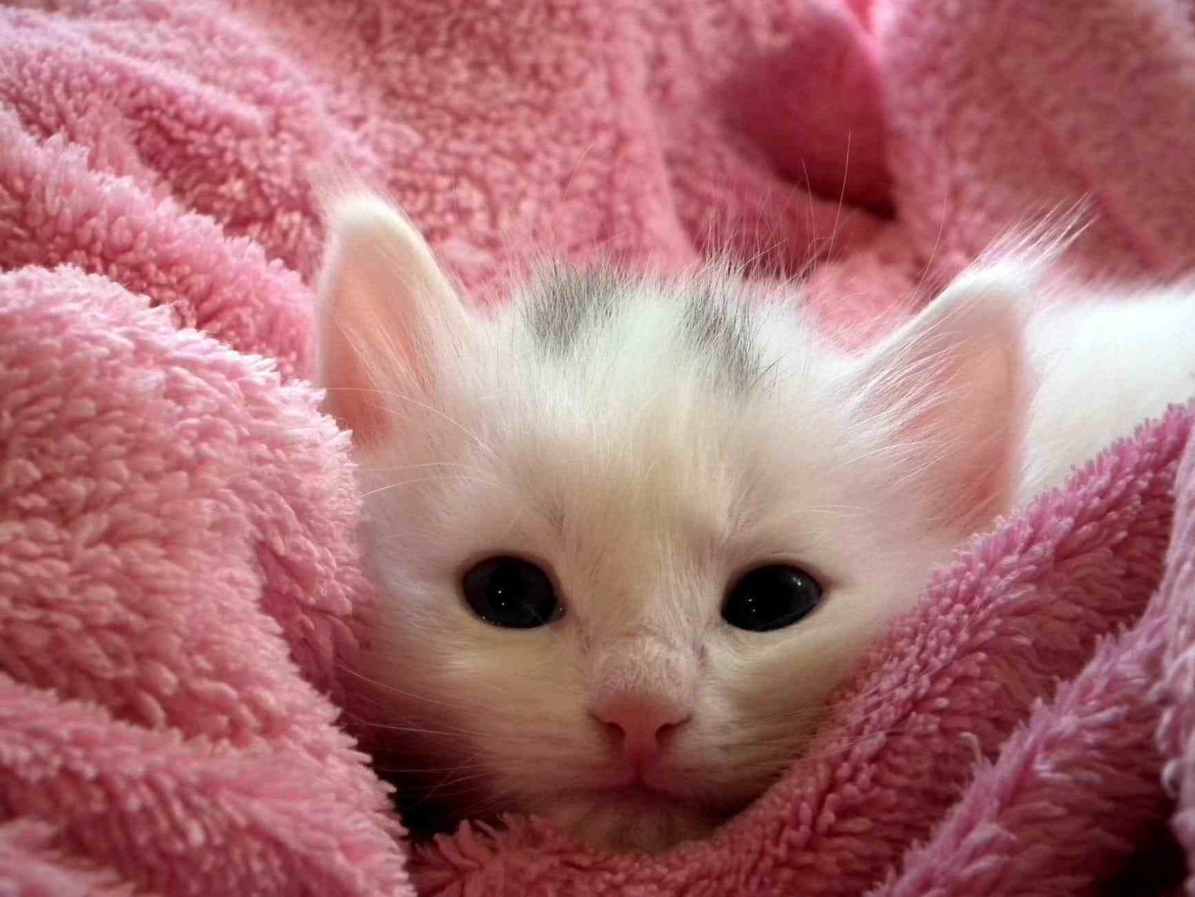 Pastikan kebersihan tubuh anak kucing