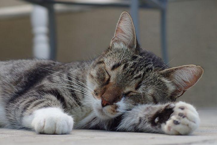 Pastikan kucing dalam kondisi tenang