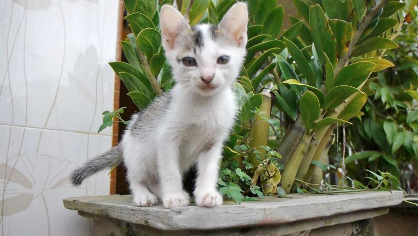 Perlakuan Untuk Anak Kucing Usia 1 Bulan minggu keempat