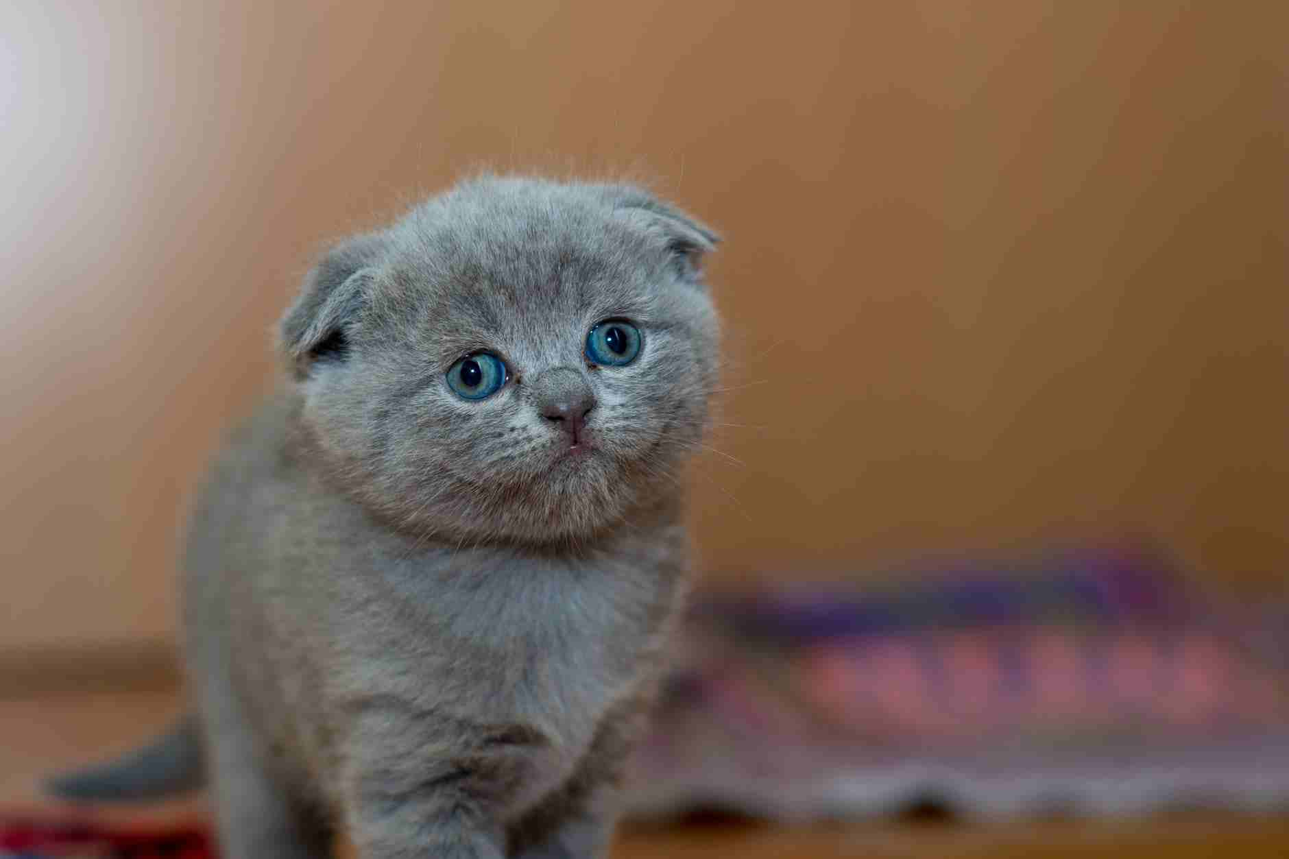 Perlakuan Untuk Anak Kucing Usia 1 Bulan