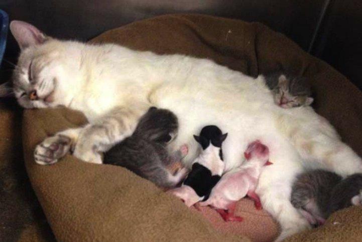 Susu dari Induk Kucing