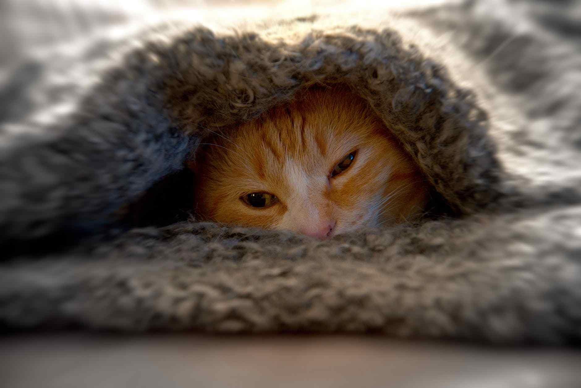 Tempat tidur kucing dan selimut