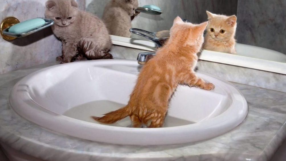 Tenangkan kucing sebelum memasukkannya ke dalam tempat mandi
