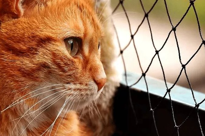 alasan kucing makan anaknya induknya stres