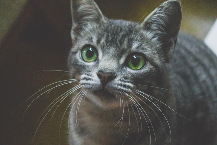 cara memanggil kucing dengan Buat panggilan untuk kucing