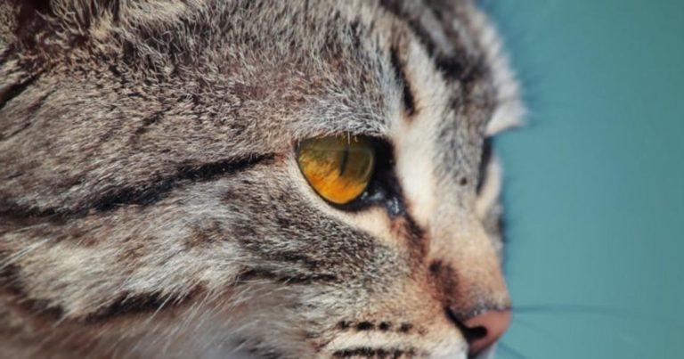 hukum memelihara kucing