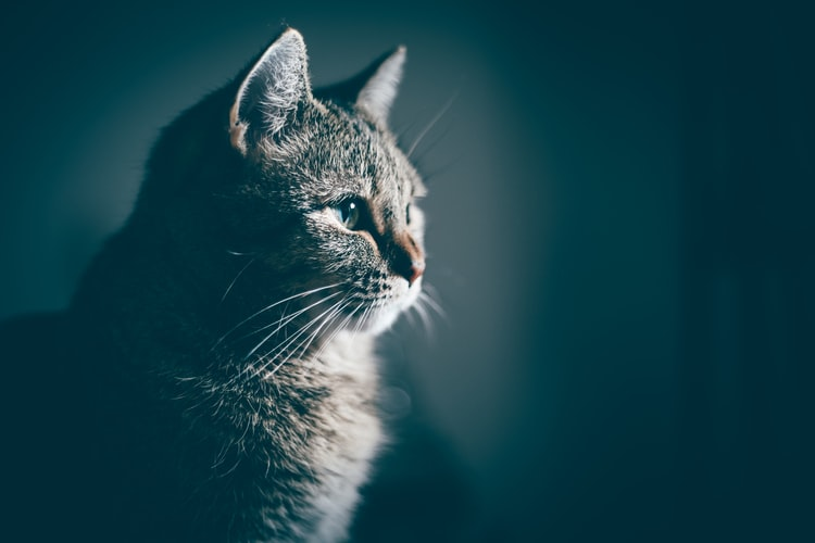 hukum memelihara kucing Menghindari najis dan memelihara kebersihan