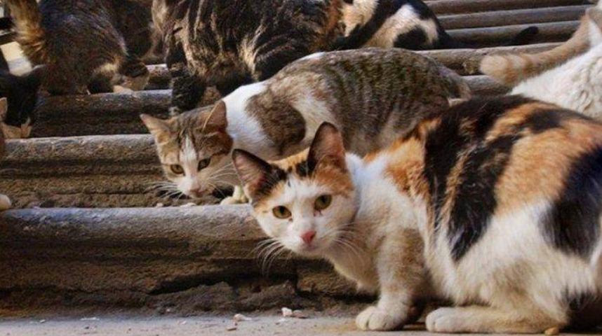 jauhkan kucing stres dari Kucing Liar