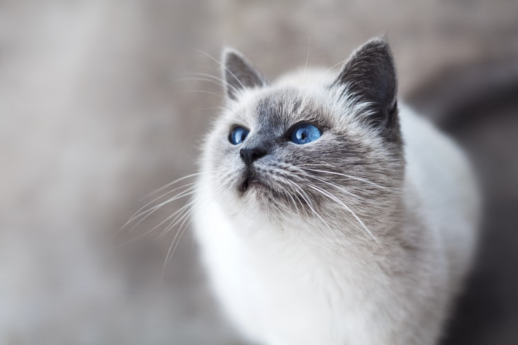 pahala memelihara kucing Memiliki Irama Seperti Dzikir Kalimah Allah