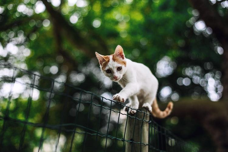 pahala memelihara kucing kucing tidak najis