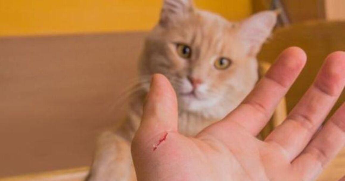 panyakit cakar kucing