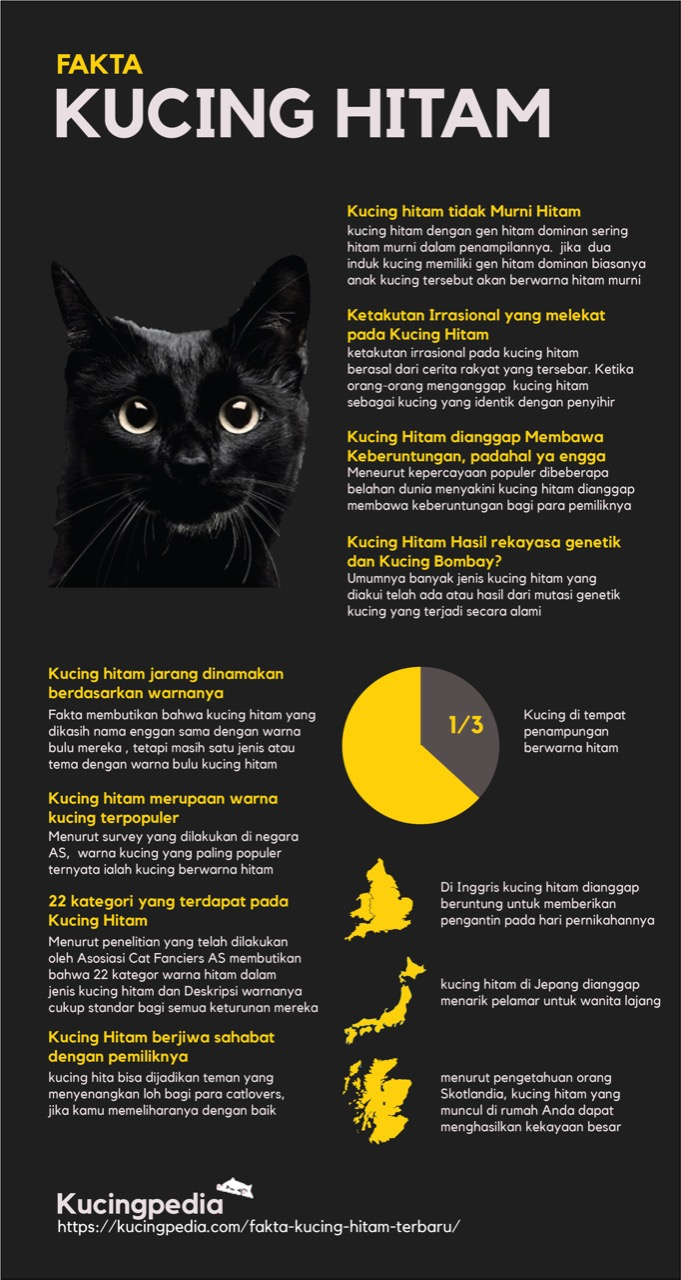 infografis-fakta-kucing-hitam-by-kucing-pedia